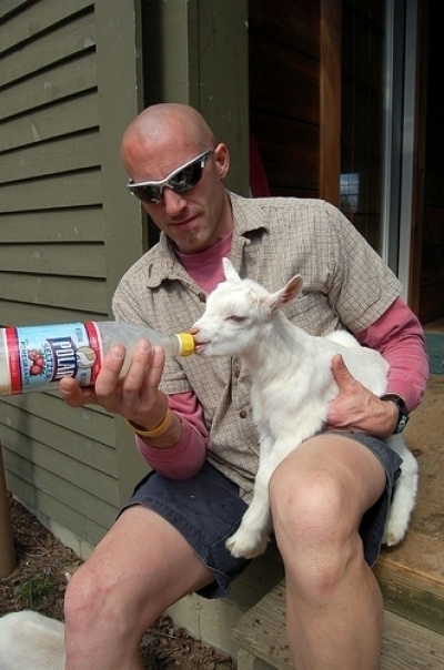 bottle feeding a goat kid